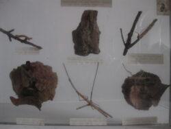 Insecten vintage schoolleermiddel achter glas. Jaren 50-60. Conditie redelijk.